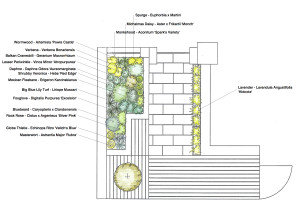 Clarendon Planting Plan copy 2